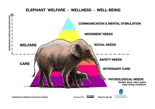 Elephant hierachy LR diagram.jpg
