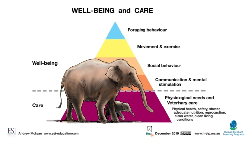 Elephant Welfare LR.jpg